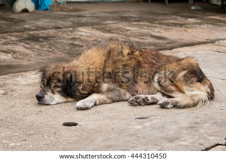 Dog lying on the ground