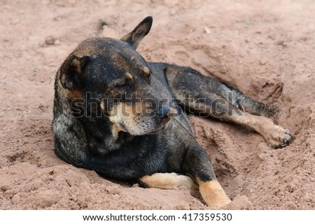 Dog lying on the ground to reduce hot - stock photo