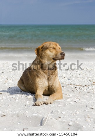 dog lying on the sand at the seaside - stock photo