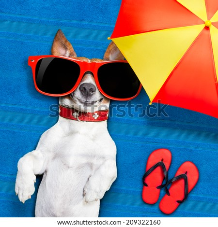dog lying on towel under shade of umbrella relaxing and chilling out in the summer vacation - stock photo