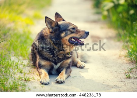Dog lying outdoor on dirt road - stock photo