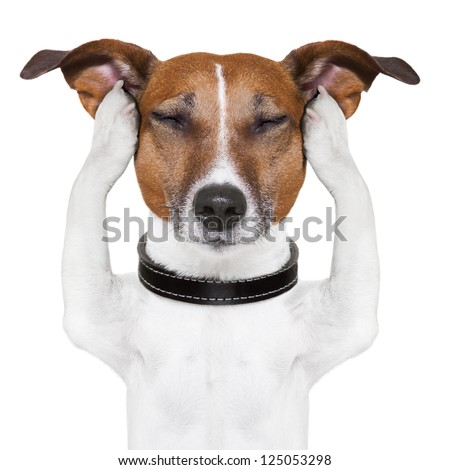 dog meditates with closed eyes and ears - stock photo