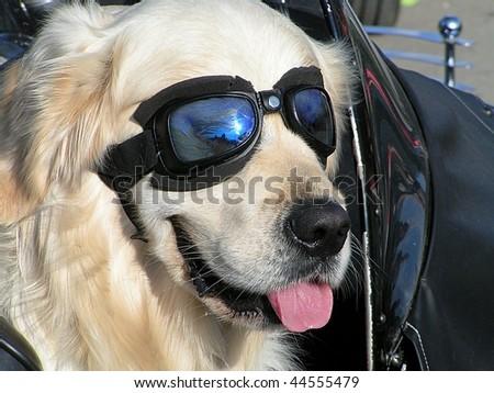 Dog Motorcycle - stock photo