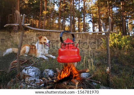 dog near campfire with boiled tea in autumn forest  - stock photo