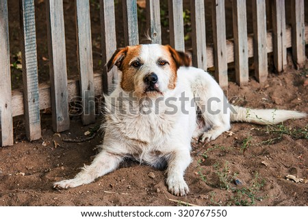 Dog near fence. Homeless dog is waiting for adoption. Shelter dog waiting for its new master with great patience. Adopt a pet concept. Rabies danger. - stock photo