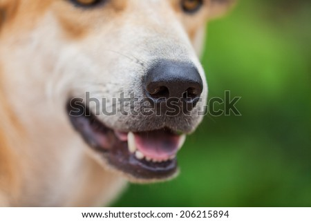 Dog nose - stock photo