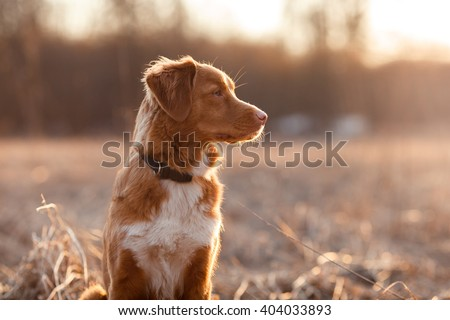 Dog Bring Stock Images, Royalty-Free Images & Vectors | Shutterstock