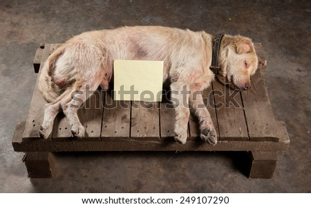 Dog of Death on the wooden ground - stock photo