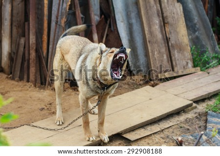 Dog on a chain. The dog protects the house. Vicious dog. The dog barks. - stock photo
