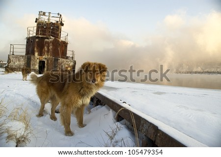 Dog on a coast of the river on a background of the old ship. - stock photo