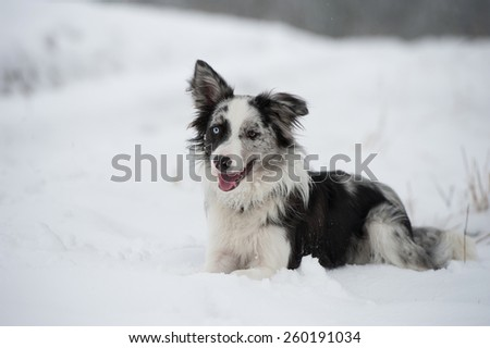 Dog on a gloomy winter day - stock photo