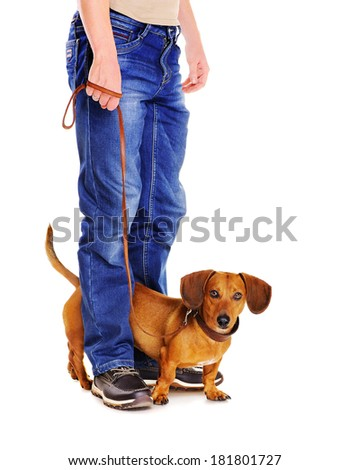 dog on a leash ready to go for a walk