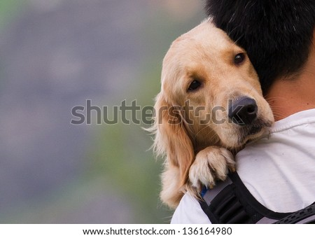 Dog on a man shoulders - stock photo
