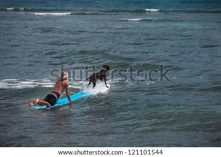 Dog on a surfboard with a Blonde Surfer Paddling - stock photo