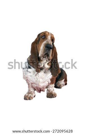 dog on a white background shot in studio - stock photo