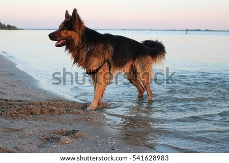 dog on beach in water