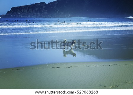 Dog on beach playing with waves, animals