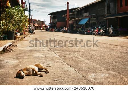 dog on streets of Ko Lanta Island, in Thailand - stock photo