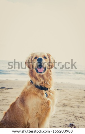Dog on the Beach - stock photo