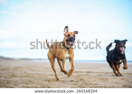 Dog on the beach - stock photo