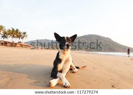 Dog on the beach in Goa state, India - stock photo