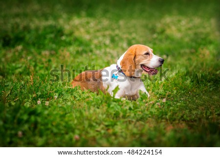 dog on the field