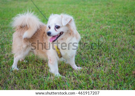 Dog on the grass in the park