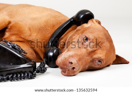 dog on the old phone - stock photo