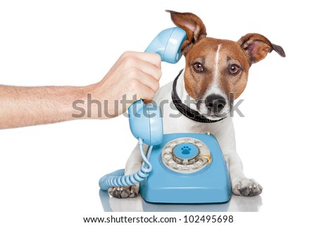 dog on the phone with male hand - stock photo
