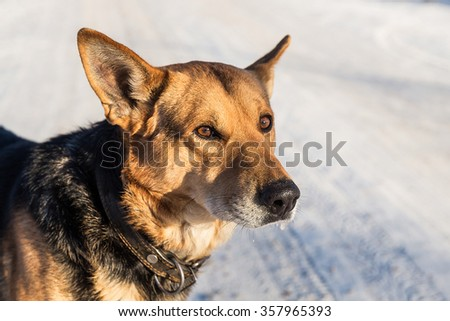 Dog on the road covered with snow