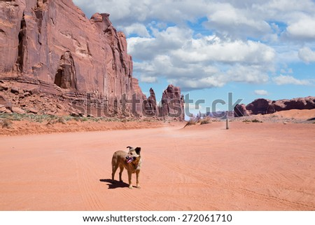 Dog on the road in Monument Valley Navajo Tribal Park, Utah - stock photo
