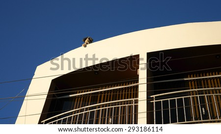 Dog on the roof - stock photo