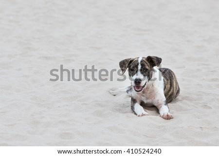 Dog on the sand - stock photo