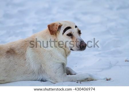 Dog on the Sand. Blue tone. - stock photo