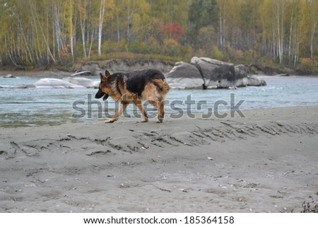 dog on the shore