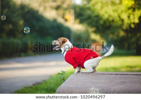 Dog on the street