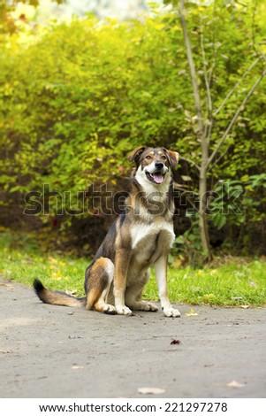 dog on the white background  - stock photo