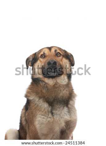 Dog on the white background - stock photo
