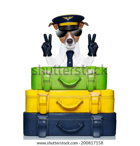 dog  on top of luggage as an airline captain - stock photo