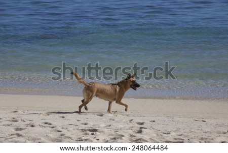 Dog on Tropical Beach - Rarotonga, Cook Islands, Polynesia - stock photo