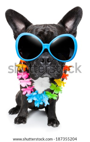 dog on vacation wearing  fancy sunglasses and flower chain