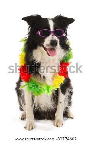 Dog on vacation with sunglasses and flower garland