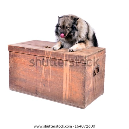Dog on wooden chest in the photo studio
