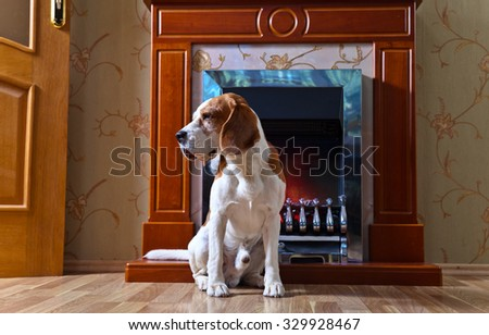 dog on wooden floor near to a fireplace