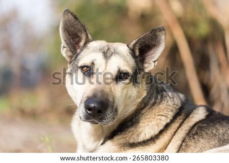 Dog Outdoors - stock photo