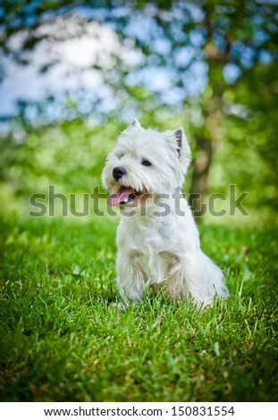 dog outdoors in a park - stock photo