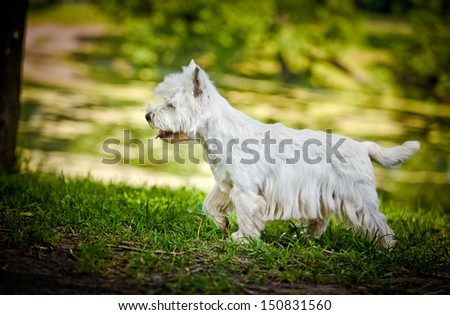 dog outdoors in a park