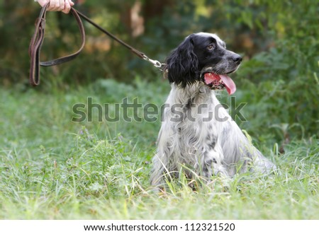 dog outdoors on natural background - stock photo