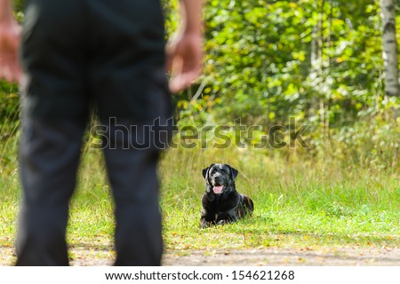 Dog owner trains his labrador retriever, dog lie down on background, horizon format - stock photo