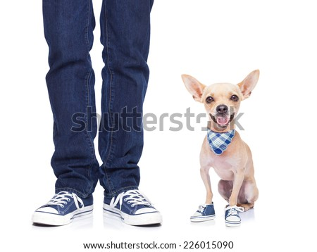 dog owner with dog both wearing sneakers, ready for a walk together,dog very happy,  isolated on white background - stock photo